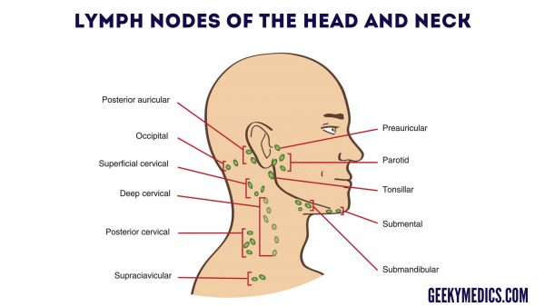 Neck Lump Examination - OSCE Guide Geeky Medics