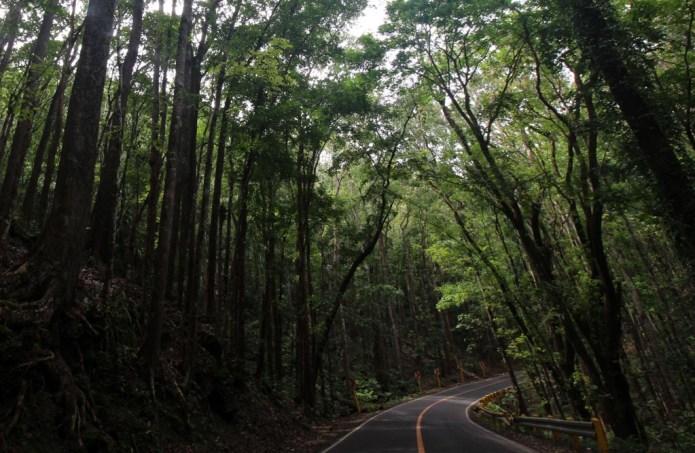 Man Made Mahogany Forest 5