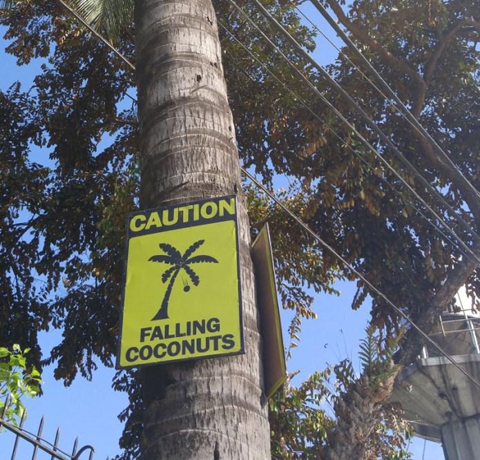 coconuts falling warning sign
