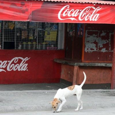 dog in front of sari-sari store