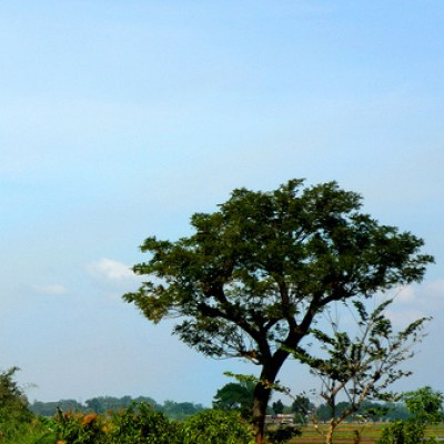 bulacan fields and trees