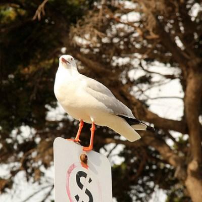 seagull on a traffic symbol