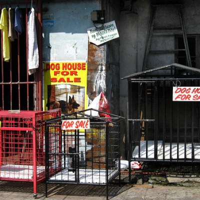 dog cages for sale