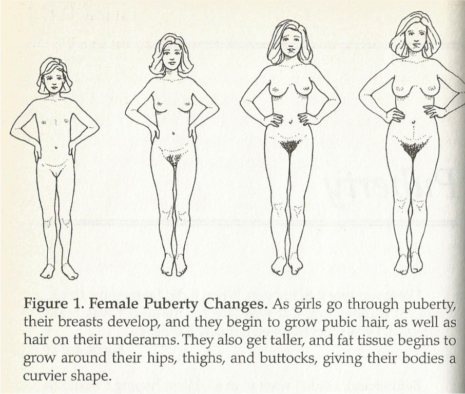 Female Puberty Changes, girls edition, pg 2 Male Puberty Changes
