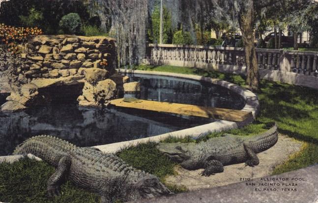 Alligator Pool in San Jacinto Plaza, El Paso