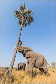Shake the Tree - GeneralLeadership