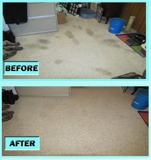 Diy Carpet Cleaning Solution To Make Your Carpets Look, Smell And