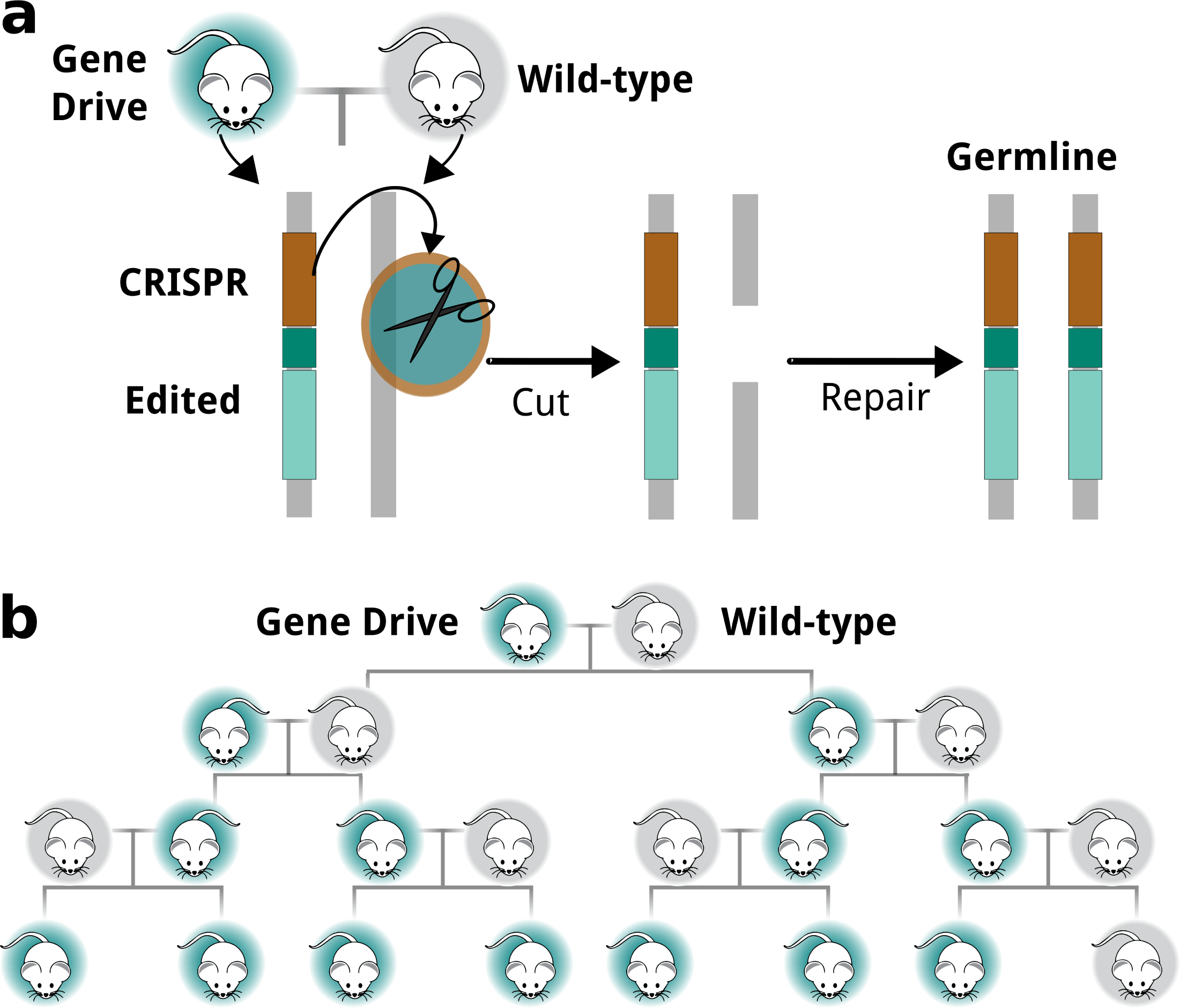 Chromosome In A Sentence Viewpoint Why Using Gene Drives To Eradicate Pests Might