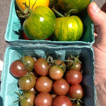 Stunningly good tomatoes from my friend's farm on Cape Cod