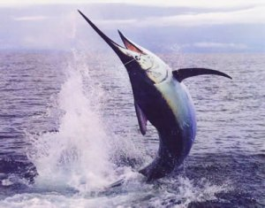 Costa Rica Deep Sea Fishing