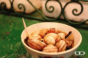 morocco_snails