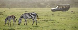 Encounter Mara in the Field