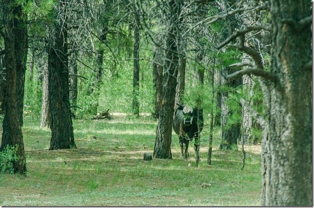 Cow Mile & a Half Lake camp SR212 Kaibab National Forest Arizona