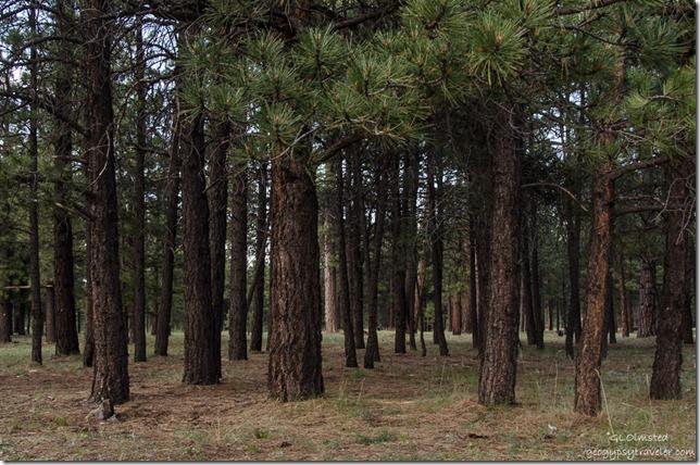 Forest Mile & a Half Lake camp SR212  Kaibab National Forest Arizona