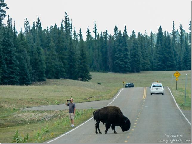 Touron & bison SR67 South North Rim Grand Canyon National Park Arizona