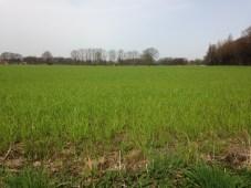 Een heuse Steppe gras plantage in het wild. Vincent had dat zomaar ff gespot...