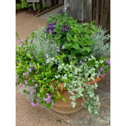 Charmful Containers Pot Ways To Pot Garden Garden Housecalls Herb Garden Containers Garden Pots