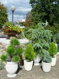 Trees in Pots? | Garden Housecalls