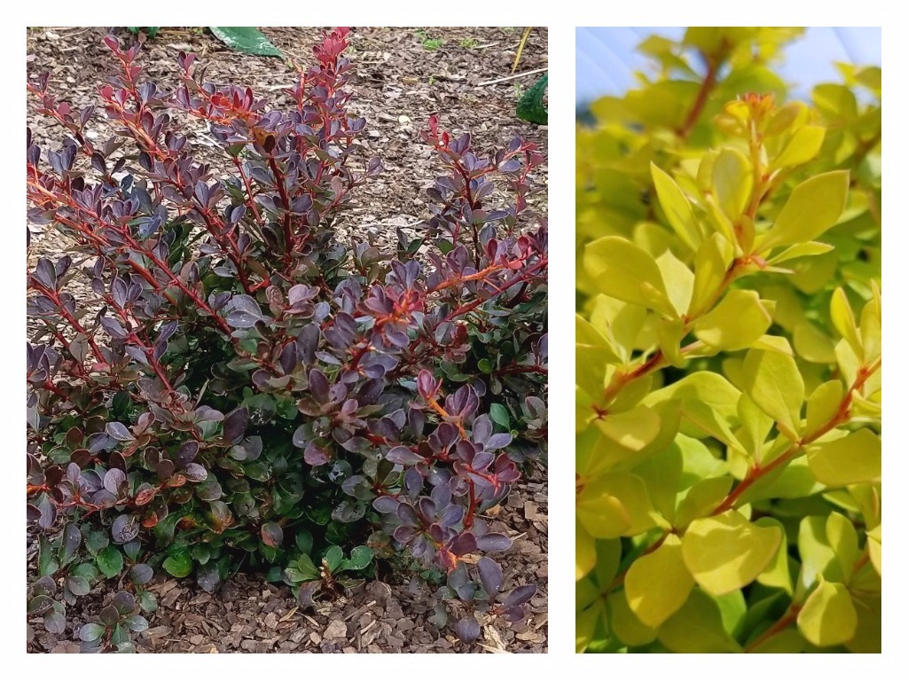 Trees And Shrubs Garden Housecalls The Best New Trees And Shrubs Of 2018
