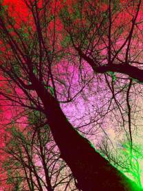 arbre de vie4