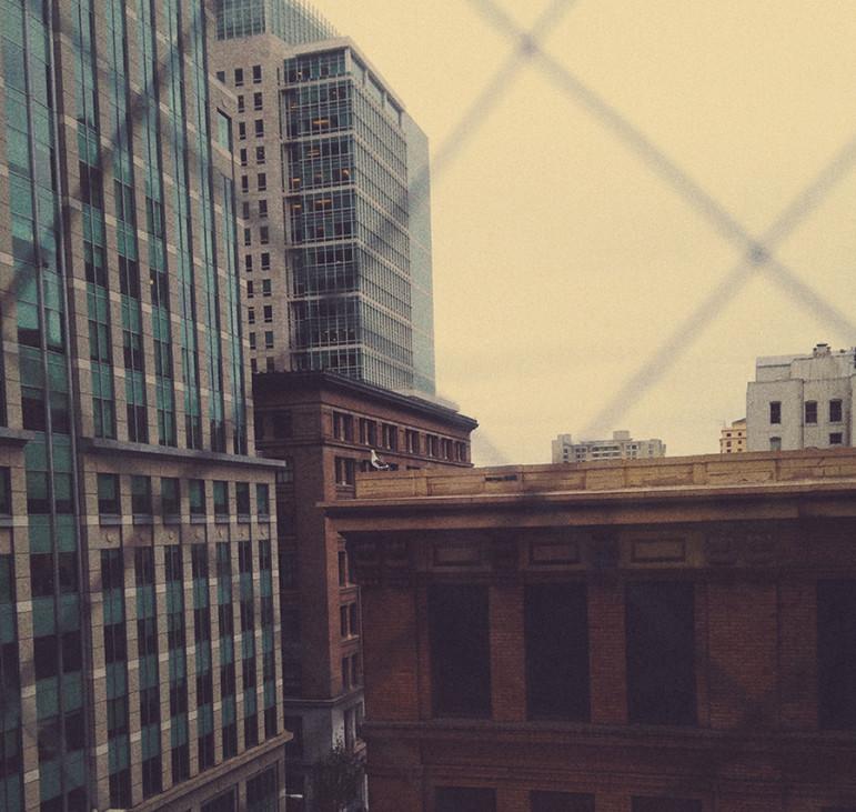 urban, city, buildings, bird