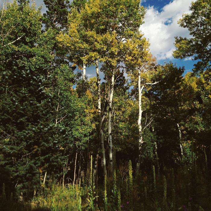 colorado, trees, forrest