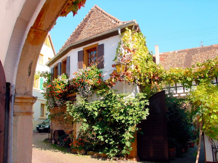 Wine in Germany: Neustadt