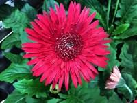 76+ 4K UHD Wallpaper Flower Roja Ideas | Best Wallpaper HD