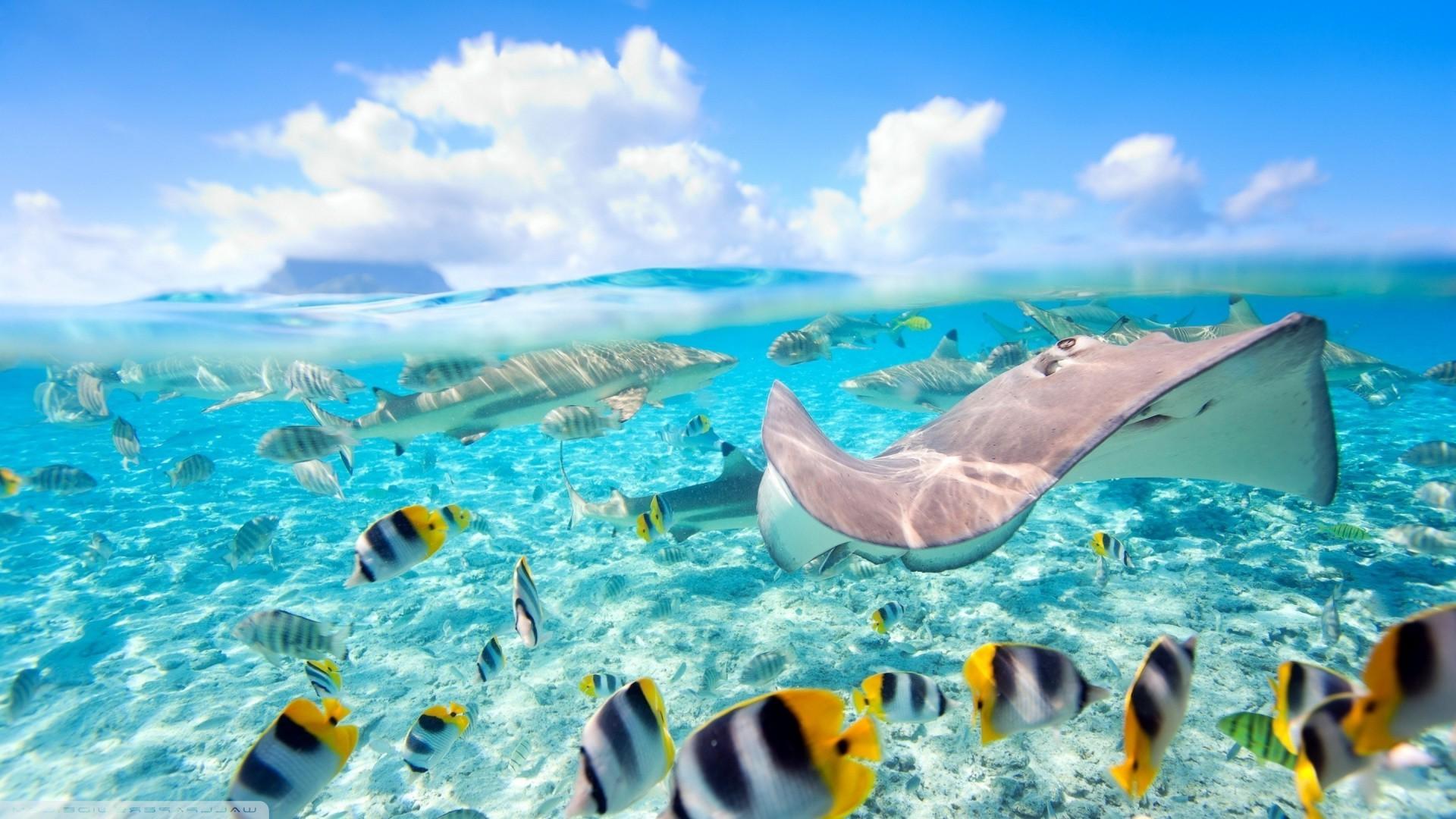 Coral Reef Wallpaper Hd Fond D 233 Cran Mer Poisson Sous Marin R 233 Cif De Corail