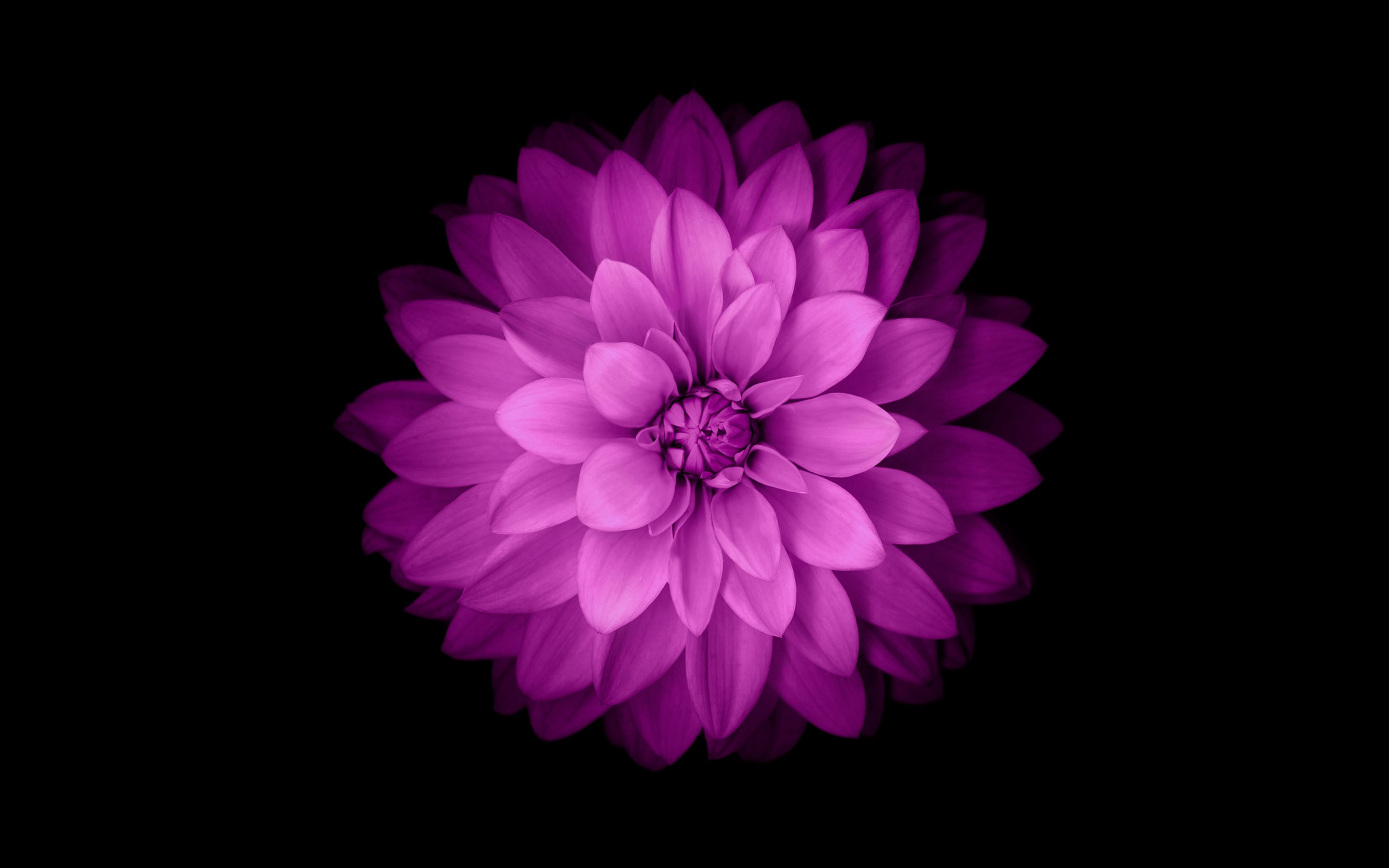 Ios 7 Live Wallpaper 3d Pro Baggrunde Enkel Baggrund Blomster Minimalisme Lilla