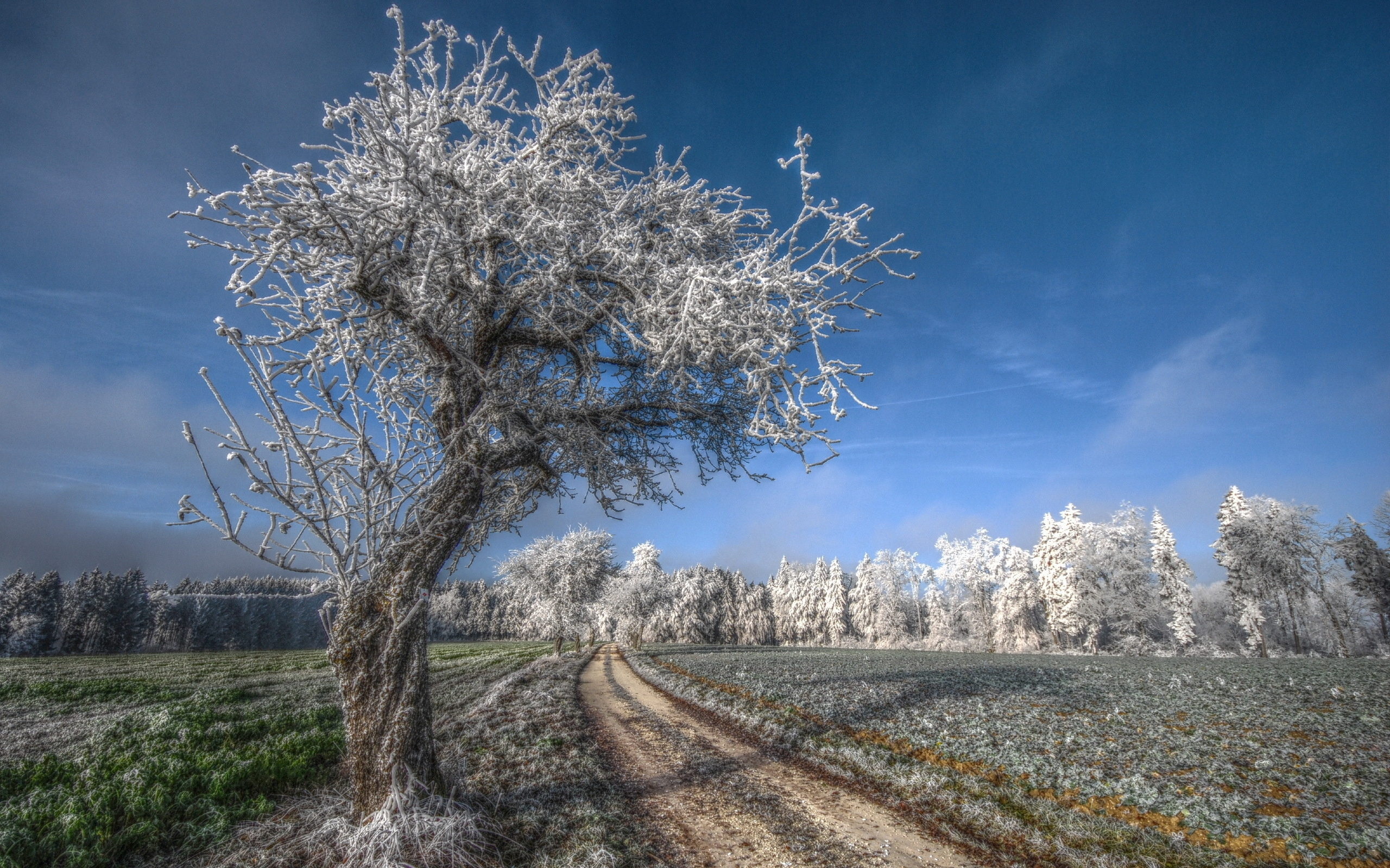 Late Fall Wallpaper Fond D 233 Cran Arbre Route Givre Cheveux Gris Du Froid