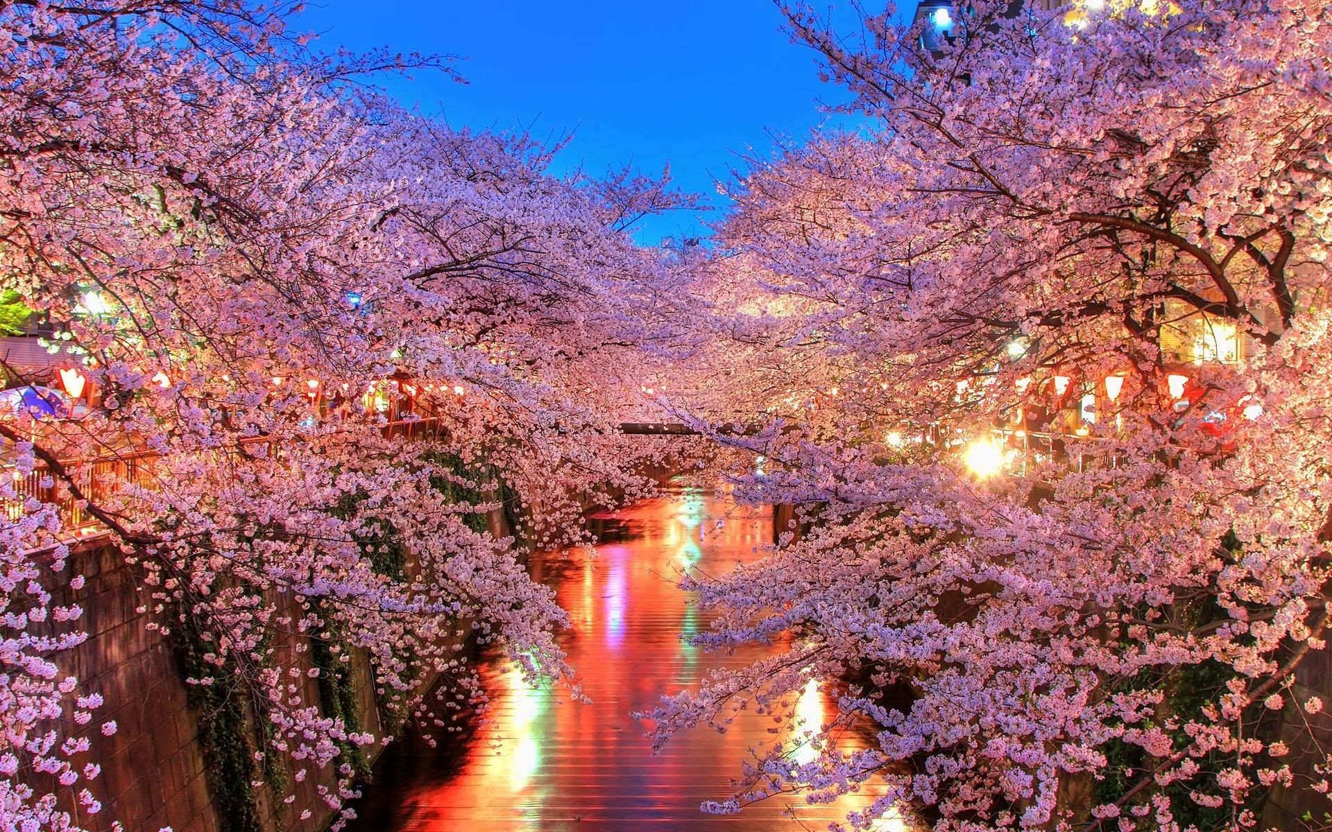 Wallpapers Cherry Blossom Wallpaper Trees Landscape Lights Flowers Water Plants