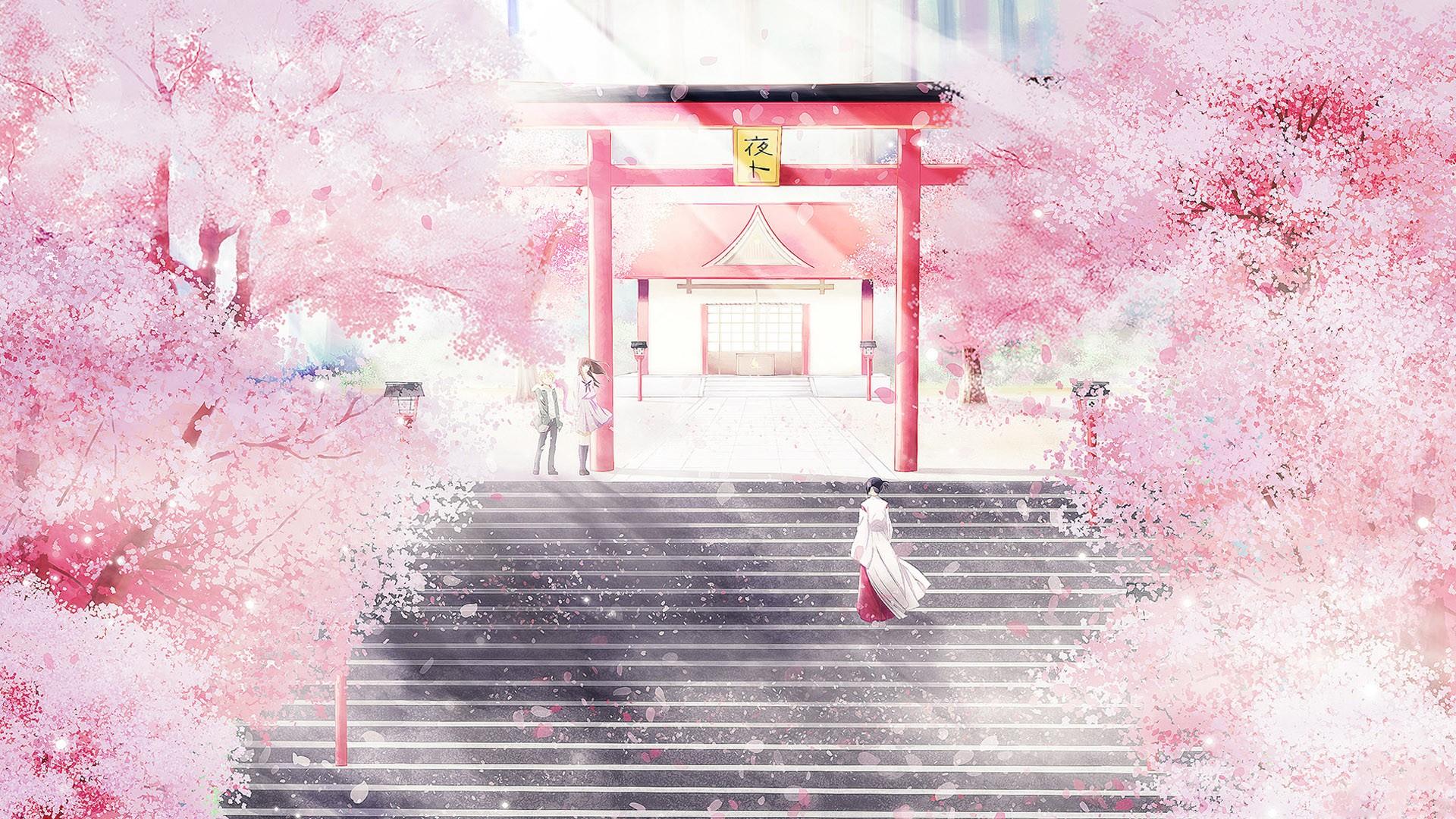 Pink Cherry Blossom Wallpaper Hd Sfondi Bianca Rosso Parete Casa Fiore Di Ciliegio