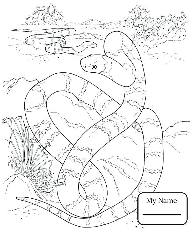 free ball python snakes coloring pages auto electrical wiring diagram