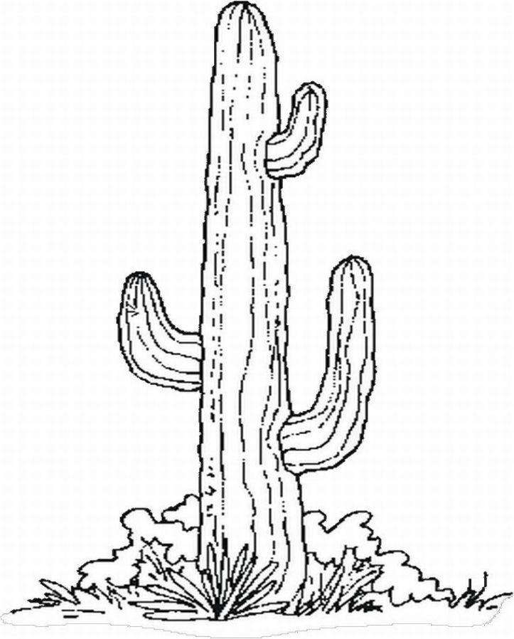 Cactus Coloring Page at GetColorings Free printable colorings
