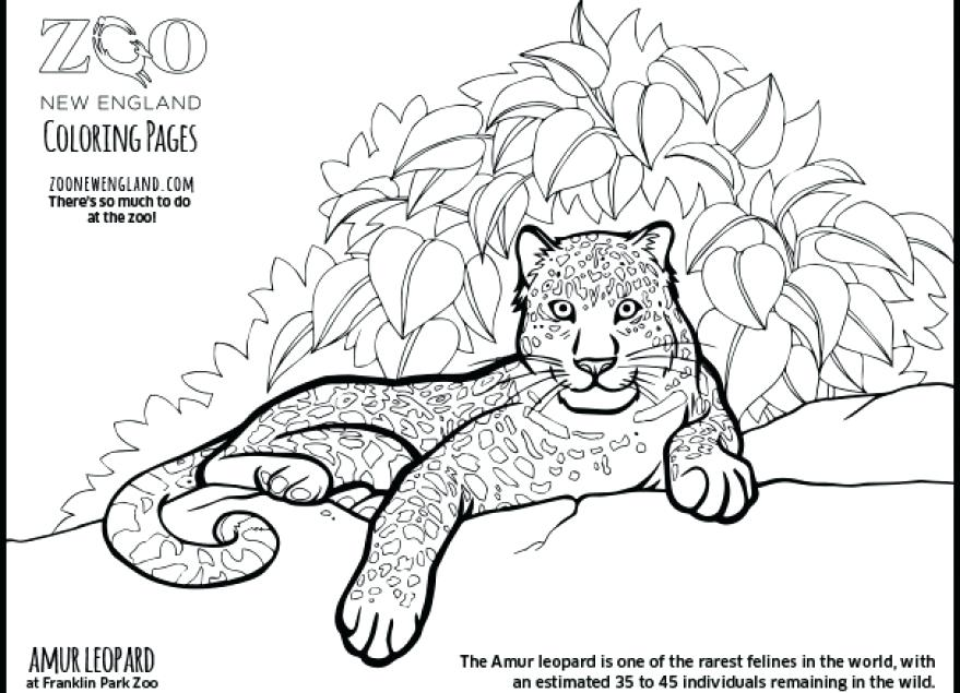 Snow Coloring Pages At Getcoloringscom Free Printable