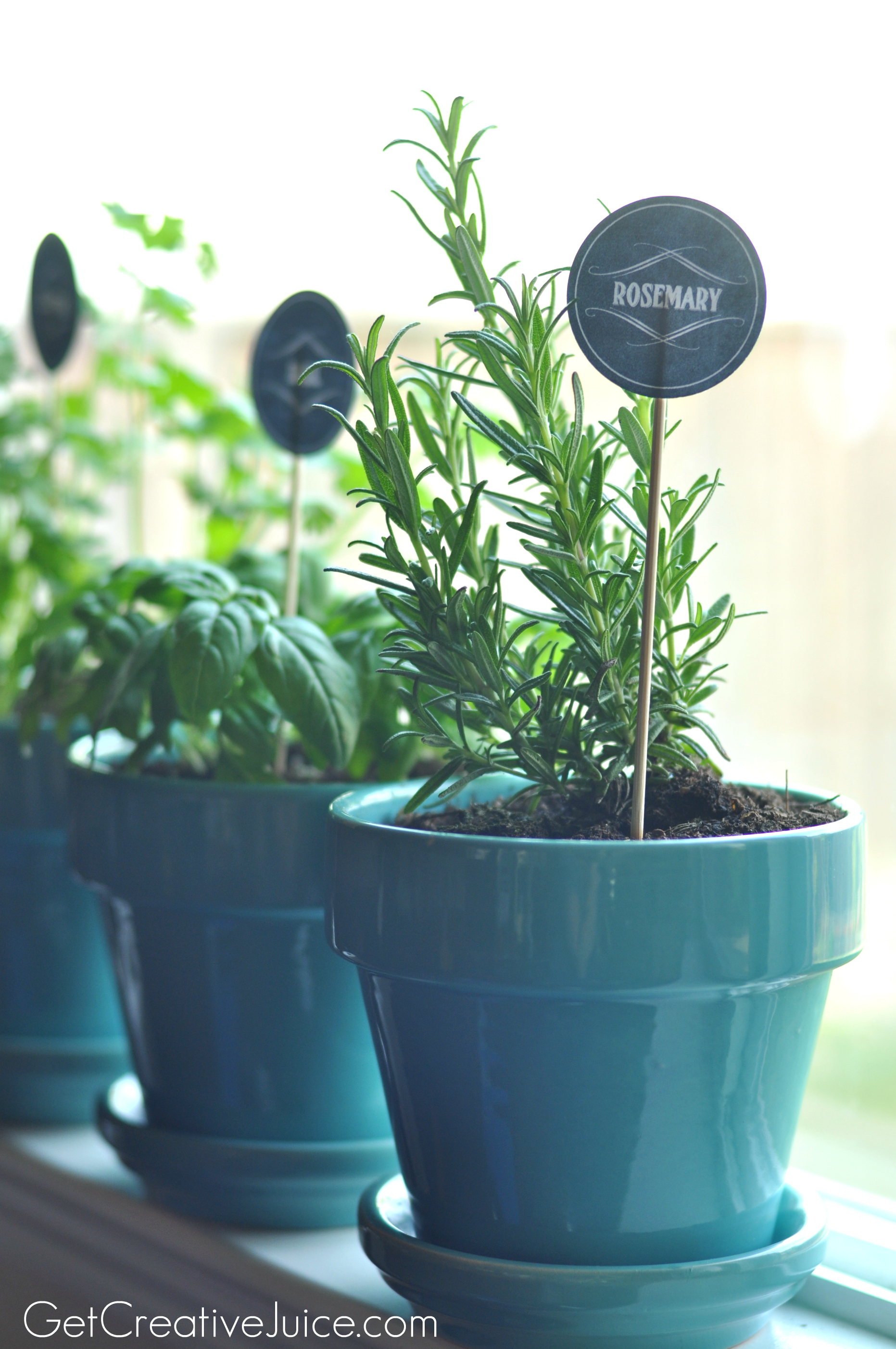 Best Pots For Indoor Herbs Diy Potted Herb Garden Save Money On Fresh Herbs The