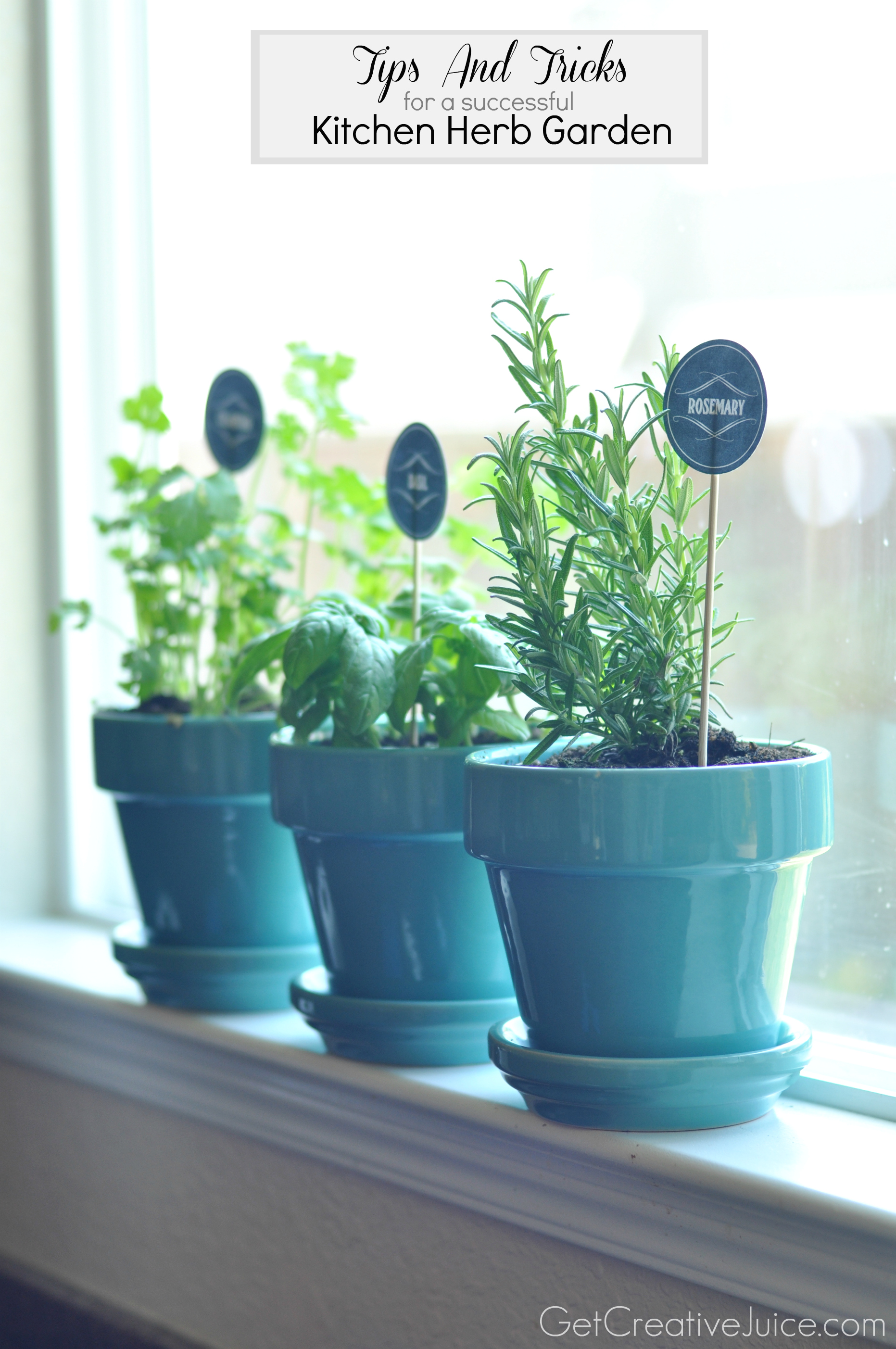 Herb Pots Kitchen Tips And Tricks To Maintaining An Indoor Kitchen Herb