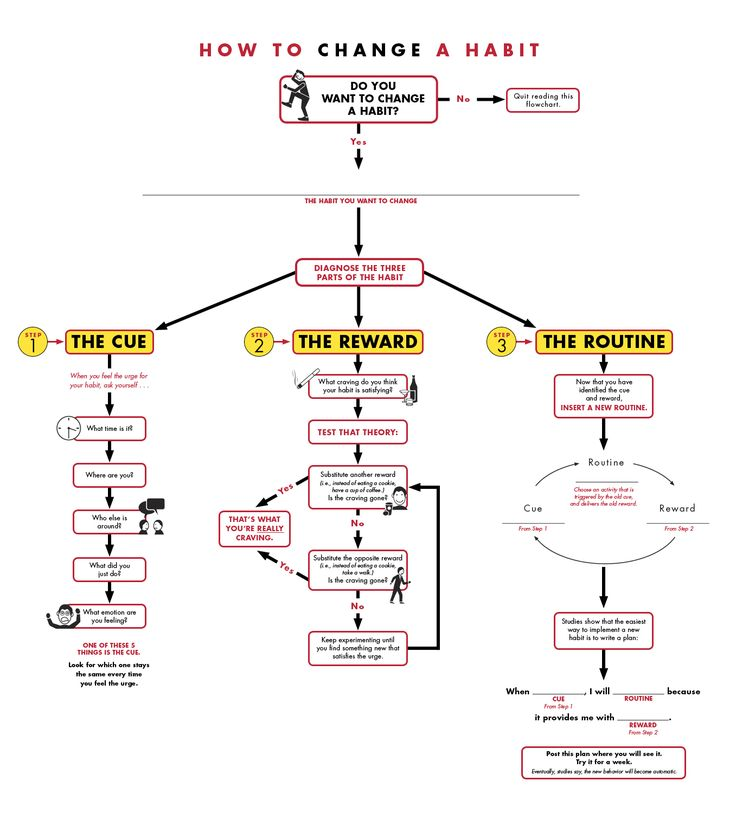 19 Flowcharts That Will Actually Teach You Something \u2013 Dolphins