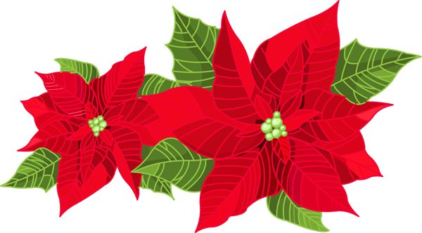 The best free Poinsettia clipart images Download from 103 free