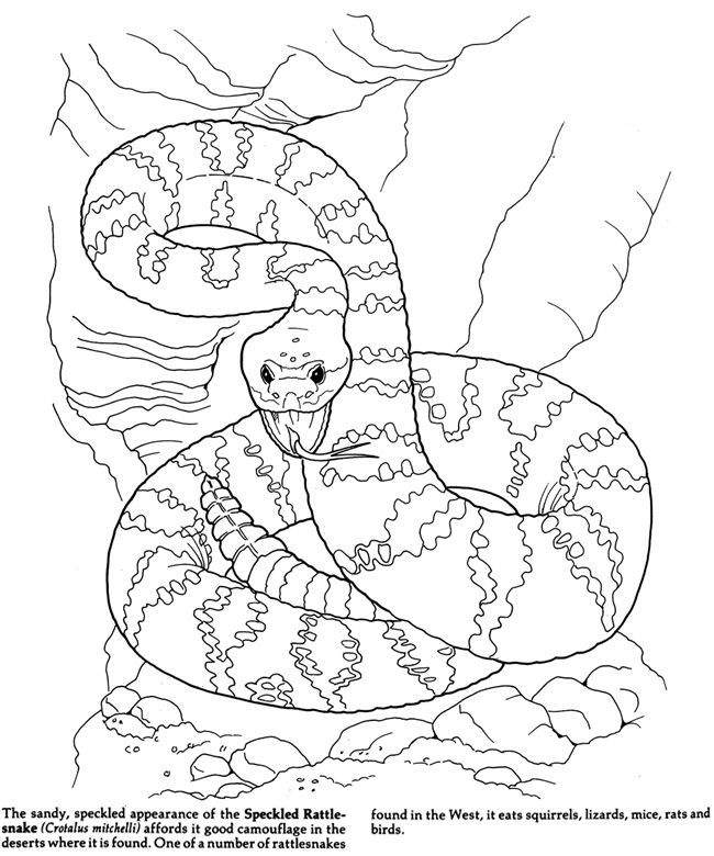Desert Coloring Pages Printable at GetDrawings Free for