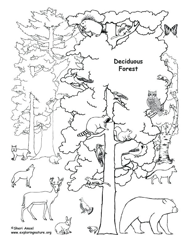 Forest Trees Coloring Pages at GetDrawings Free for personal
