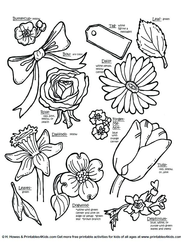 Forget Me Not Coloring Page at GetDrawings Free for personal