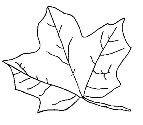 Leaves Line Drawing at GetDrawings Free for personal use