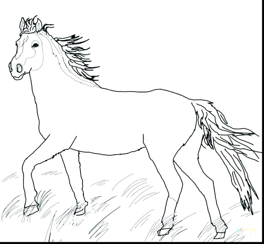 Horse Head Coloring Pages at GetDrawings Free for personal use