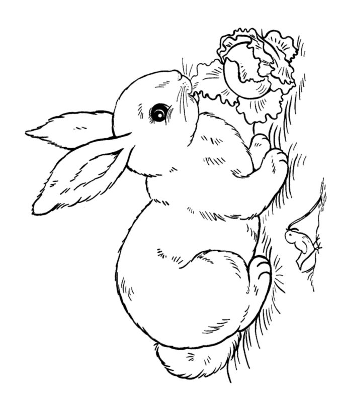 Rabbit Coloring Pages For Adults at GetDrawings Free for