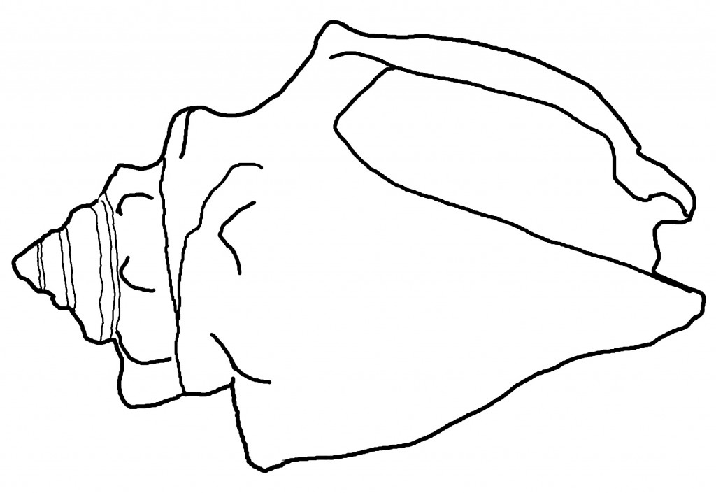 Sand Dollar Coloring Page at GetDrawings Free for personal use