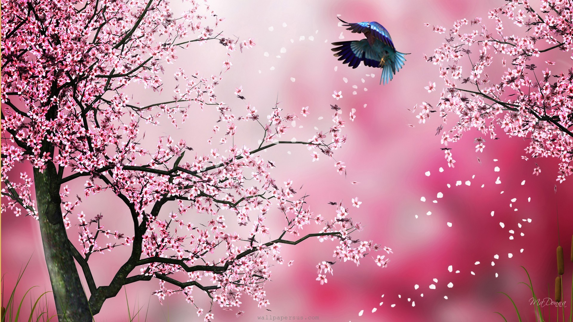 Wallpapers Cherry Blossom Cherry Blossom Drawing Wallpaper At Getdrawings Free For