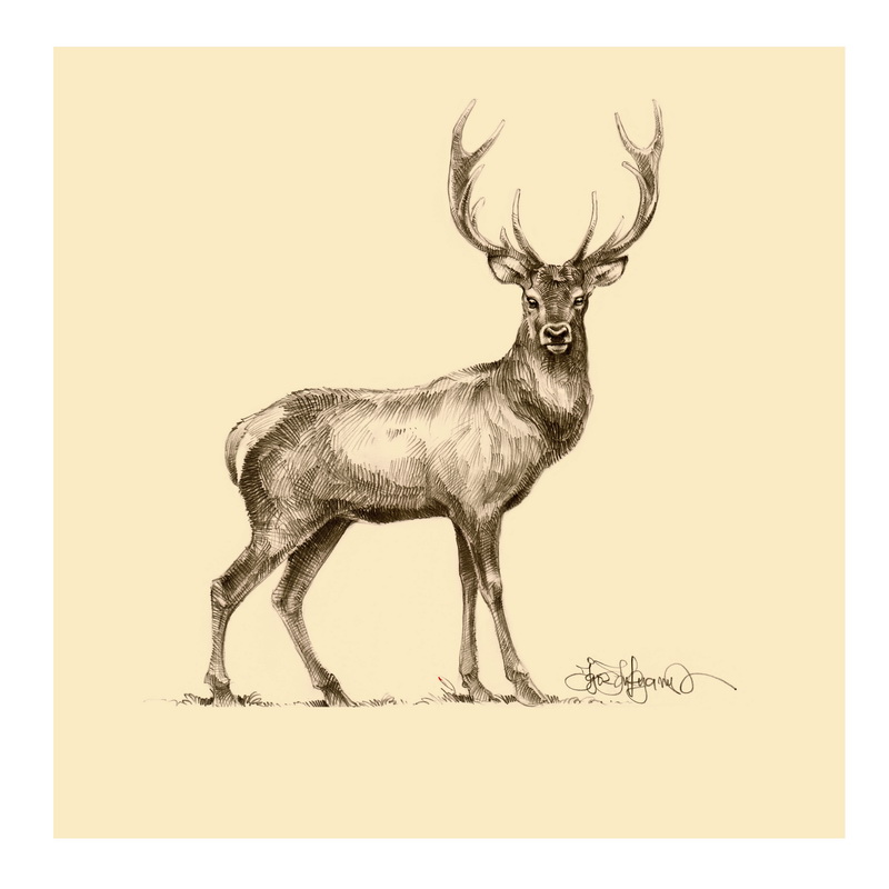 Pencil Drawing Of Deer 4 Best Images Of Deer Sketches Printable