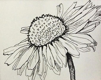 Sunflower Images Drawing At Getdrawingscom Free For